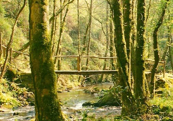Day 3 : A Ponte de Ferreira - Melide (20 km ~ 5 hours)