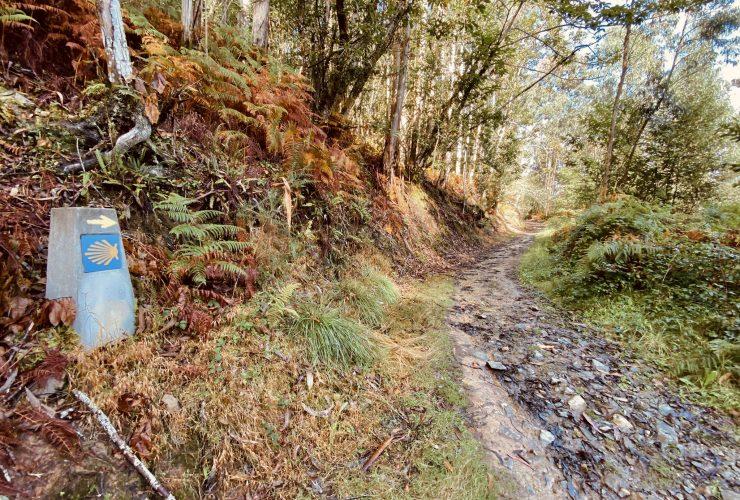 camino-santiago-otoño